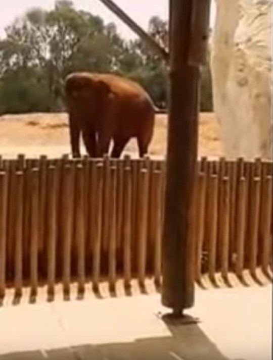The elephant threw a rock at the girl (Picture: YouTube/Jadid247)