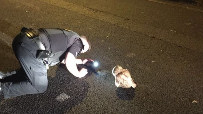 Owl blocking road 'resists' police