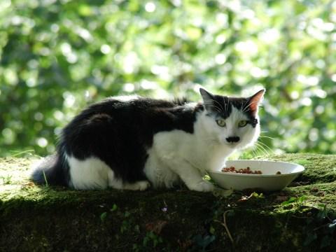 Austrian man jailed after posting Hitler cat photo