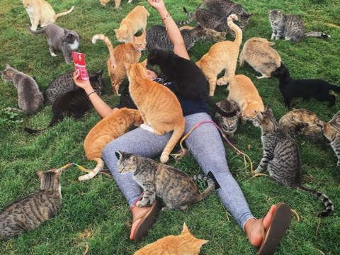 Just so you know, there's a place in Hawaii where you can hang out with hundreds of cats