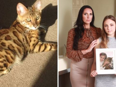 Stolen cat found after four years – but family can't be told where he is