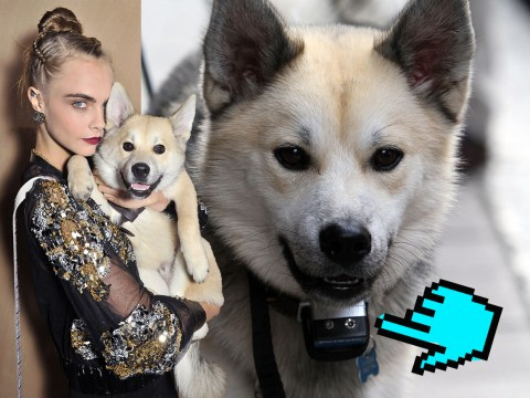 Animal rights activists slam Cara Delevingne for making her dog wear anti-bark collar