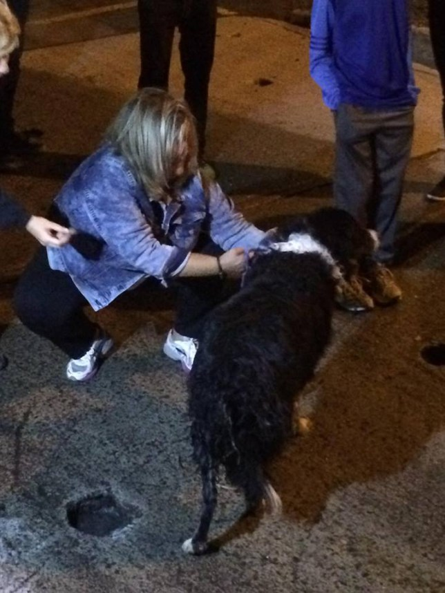 Dog rescued from cliff and reunited with family after being missing for 11 days