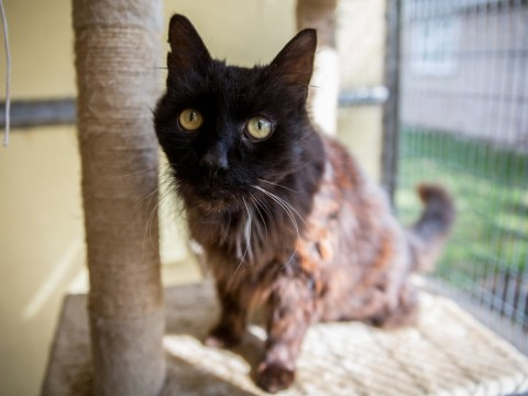 Dumped cat turned out to be a possible record breaker
