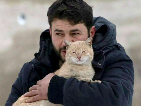 'Cat man of Aleppo' stays in Syria to look after pets left behind