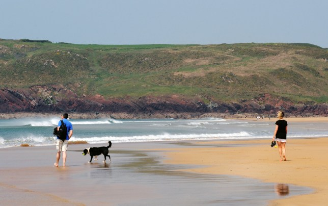 "COPY BY TOM BEDFORD Pictured: Freshwater West beach in Pembrokeshire, Wales, UK. STOCK PICTURE Re: A dog was hailed a hero for rescuing a holidaymaker's false leg when it was swept into the sea. The wire-haired German pointer called Gertie dived into the waves and came back with the prosthetic limb. Gertie and her owner John Dooner, 71, were on a beach when the woman's leg floated away after removing it to sunbathe. John threw a stone towards the plastic leg and 18-month-old Gertie loves a game of fetch. Artist John said: ""She saw the splash and dived into the water - it's her favourite game. ""She came back with the only thing that was floating - the woman's leg. ""The woman was delighted to get it back and Gertie is getting a big bone as a reward."" The holidaymaker, in her late sixties, was sunbathing at Freshwater West, Pembrokeshire, when Gertie sprang into action."