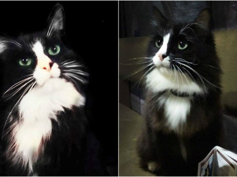 Star of show about missing cat goes missing