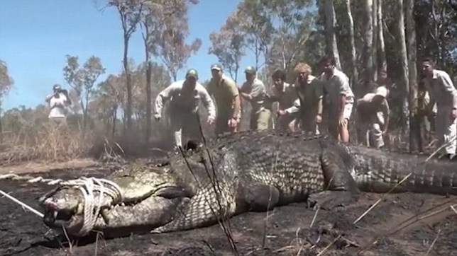 Bindi Irwin posted the video of a crocodile capture to her Instagram (Picture: Instagram/Bindi Irwin()