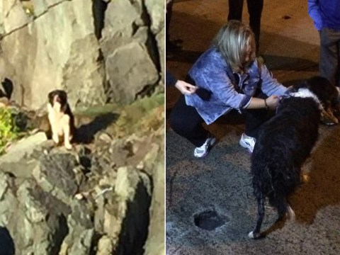 Dog rescued from cliff and reunited with family after going missing for 11 days