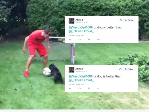 Arsenal fans suggest Mesut Ozil's dog would score more goals than Olivier Giroud