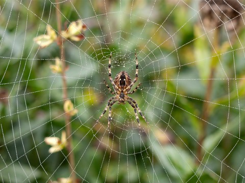 Here's how to cure your fear of spiders