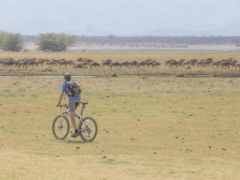 Tanzania by bike: Are you brave enough to take on Tanzania's incredible wildlife on a bicycle safari?