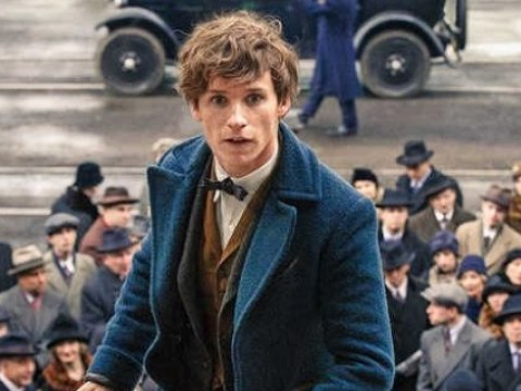 Here's why you don't need to know anything about Harry Potter to enjoy Fantastic Beasts