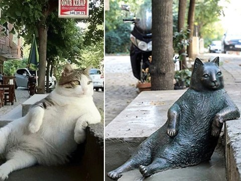 Istanbul's favourite cat has been honoured with a bronze statue in his special lounging spot