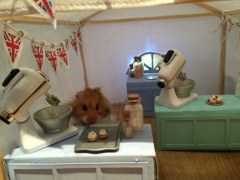 A hamster owner builds her pets tiny sets for them to play with