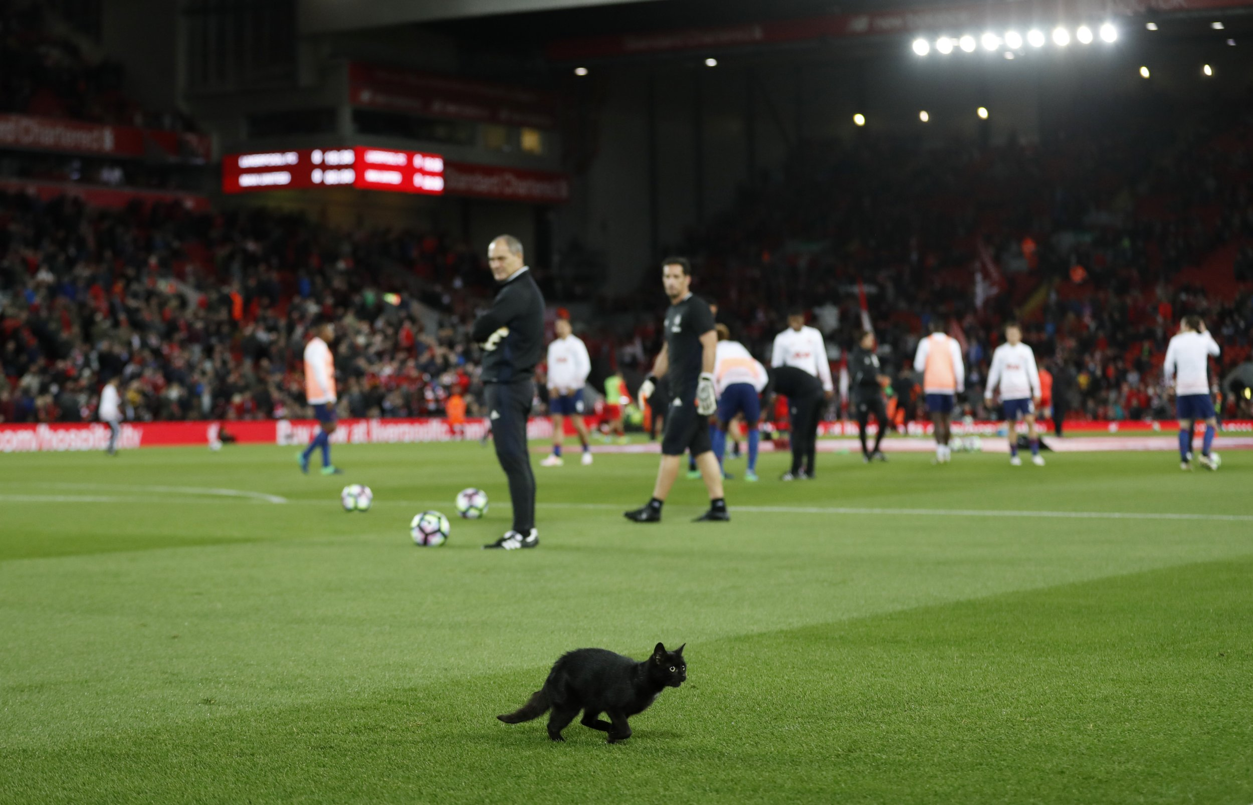 Liverpool v Manchester United: People loving one cat pitch invasion ahead of clash