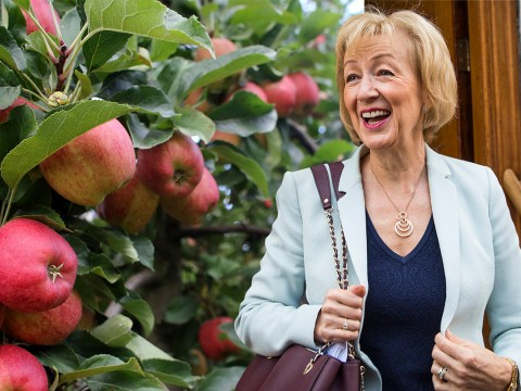 Andrea Leadsom reckons we should all take up fruit picking after Brexit