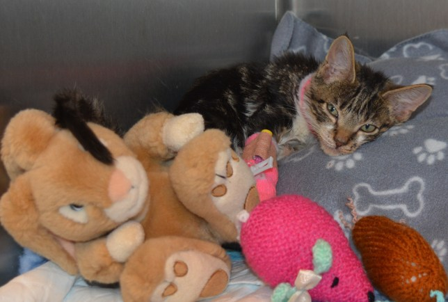 (Picture: Battersea Dogs & Cats Home)