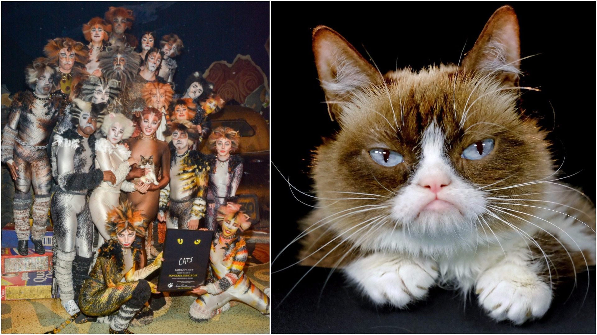 Grumpy Cat visited the Broadway cast of Cats but failed to bond with any of them