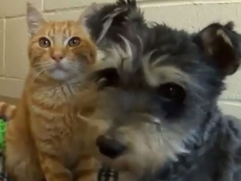 Romeo the cat and Juliet the dog fell in love as strays and now they're looking for a home together