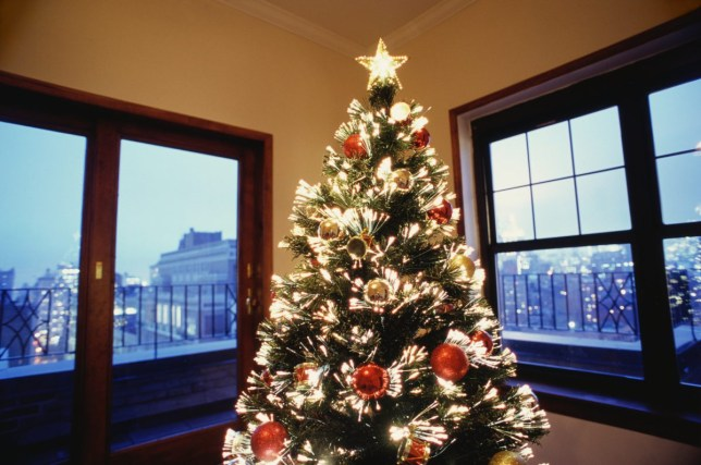 Christmas Tree at Penthouse
