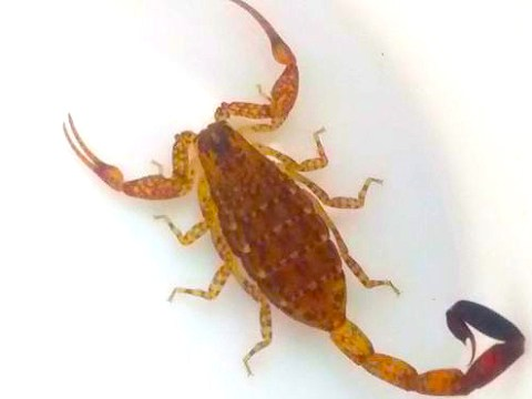 Family return home from exotic holiday and find scorpion in their luggage