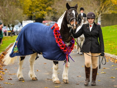 First ever Remembrance service held for fallen war horses