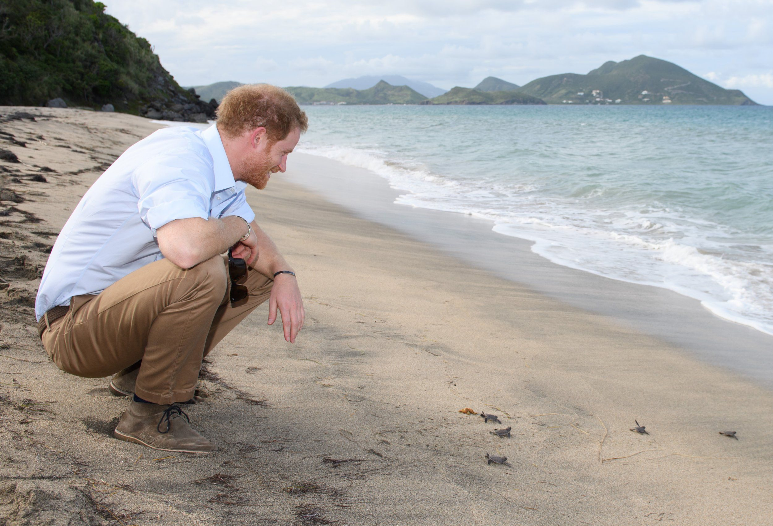 Prince Harry spends the day with some baby turtles on Lovers Beach
