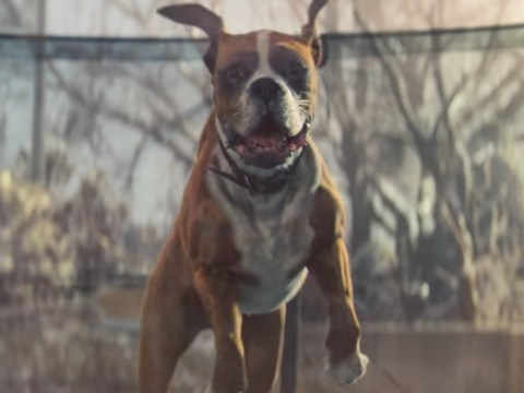 The John Lewis Christmas ad is tipped to feature a 'cuddly monster'