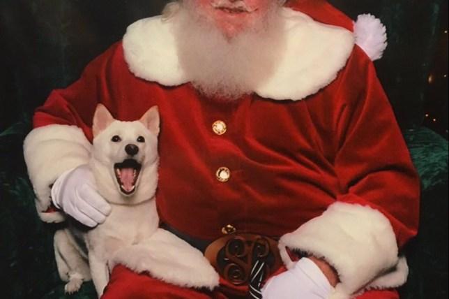 kya the dog meets santa