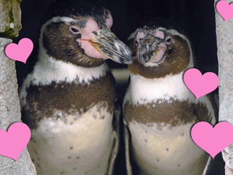 Two gay penguins are celebrating their 10th anniversary and it's fricking cute!