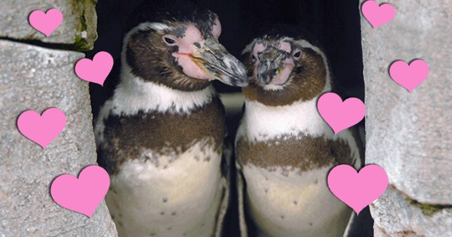 pic - bbc animals in love Dotty and Zee