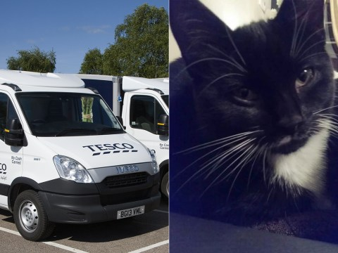 Tesco delivery driver ran over woman's kitten – and offered her money for replacement cat