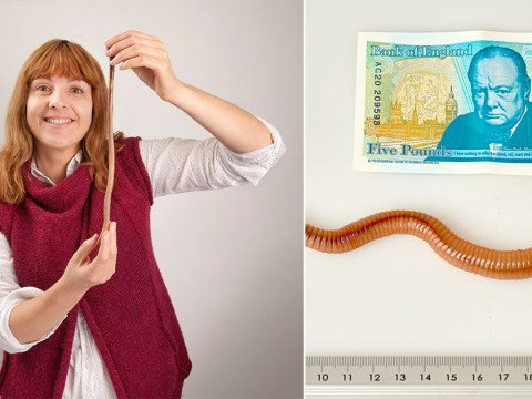 UK's longest earthworm 'murdered' after official measuring ceremony