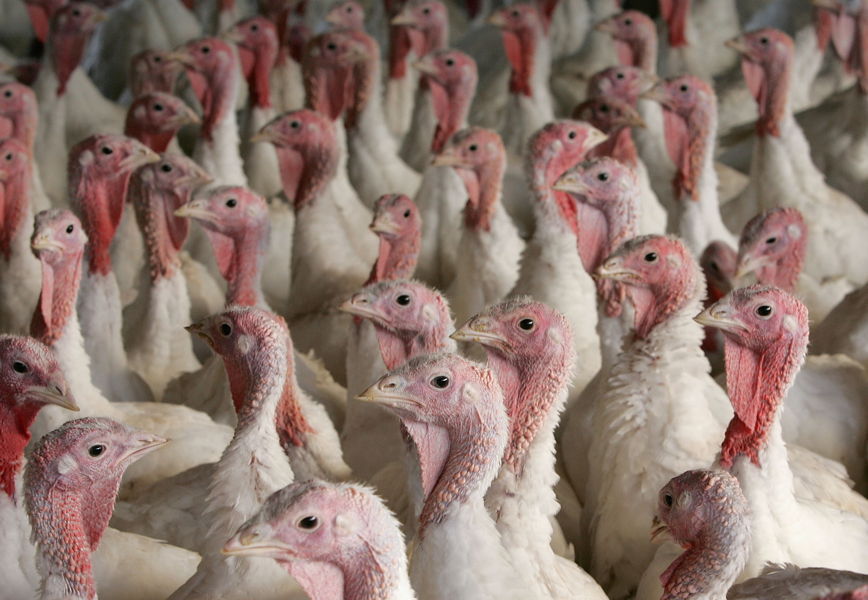 How many turkeys are eaten on Thanksgiving?