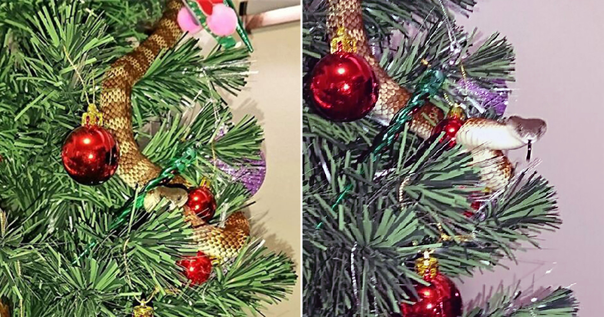 Woman discovers moving tinsel on her Christmas tree is actually a snake