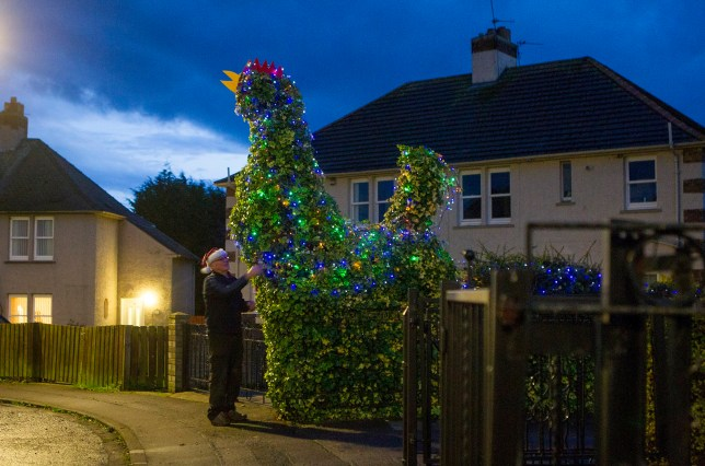 Jim Hughes from East Wemyss, Fife, with his giant cockerel shaped tree which he has covered in fairy lights for Christmas. Pensioner Jim Hughes has left neighbours opened-mouthed after turning a 14ft COCK in his front garden into a festive display. See Centre Press story CPCOCK; The 73-year-old scuplted an old cherry tree in his front garden into a cockerel while his wife Moira was on holiday earlier this year. He got up his ladder, trimmed the ivy-covered tree to make it look like the 14ft bird and then stuck pieces of red plastic on its head for its beak and a comb. The transformation took grandad Jim just 30 minutes with a pair of shears and secateurs and created a local tourist attraction. But Jim has now decorated the massive cockerel, named Jock, with festive lights in time for Christmas for neighbours and visitors to enjoy.