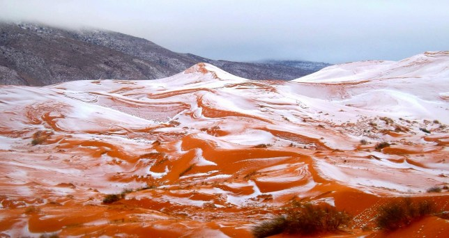 "PIC BY Karim Bouchetata/Geoff Robinson Photography 07976 880732. Picture taken on December 19th 2016 shows the snow in the Sahara desert near the town of Ain Sefra,Algeria. England is not set to have a white Christmas - but SNOW has fallen in the SAHARA desert for only the SECOND time in living memory. Amateur photographer Karim Bouchetata took incredible pictures of snow covering the sand in the small Saharan desert town of Ain Sefra,Algeria, yesterday afternoon (Mon). He captured the amazing moment snow fell on the red sand dunes in the world's largest hot desert for the first time in 37 YEARS. Snow was last seen in Ain Sefra, known as ""The Gateway to the Desert,"" on February 18, 1979, when the snow storm lasted just half an hour. This time the snow stayed for a day in the town, which is around 1000 metres above sea level and surrounded by the Atlas Mountains. Karim said: ""Everyone was stunned to see snow falling in the dessert, it is such a rare occurrence. It looked amazing as the snow settled on the sand and made a great set of photos. ""The snow stayed for about a day and has now melted away."""