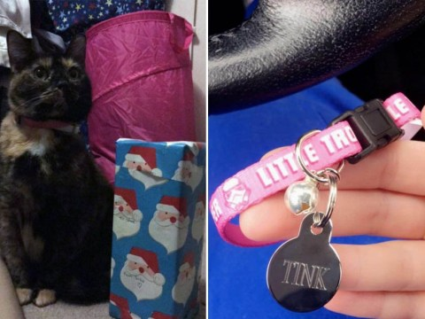 People are sharing what they got their cats for Christmas and it is beautiful
