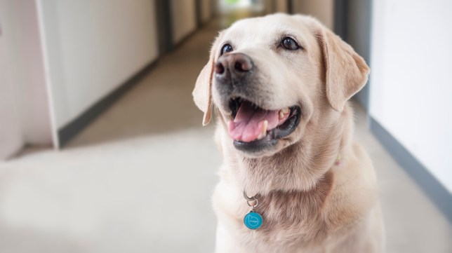 Pet Widget is the upgraded dog tag your best friend deserves Picture: Victoria Ho/Mashable/PetWidget