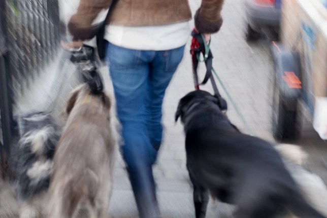 Councils spied on public for five years - including dog walkers Hyde Park. London, UK Credit: Getty Images