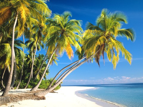 Where is hot in February? Destinations for a winter break in the sun