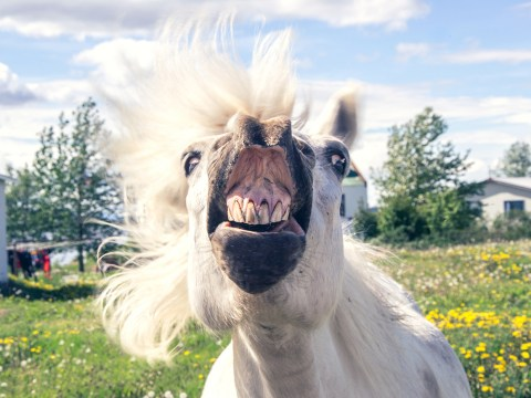 Horse called Party Till Dawn tests positive for meth