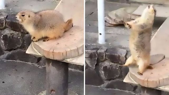 This rodent got the fright of his life when a man sneezed at the zoo