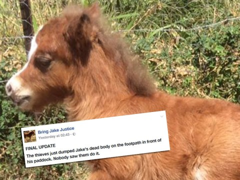 Pony's body dumped in paddock after it was snatched on Christmas Day