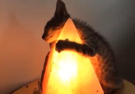Cat enjoys heat from salt lamp