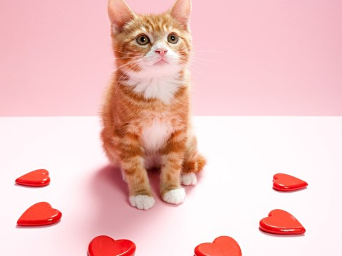 Single people can hang out with cats at Battersea this Valentine's Day