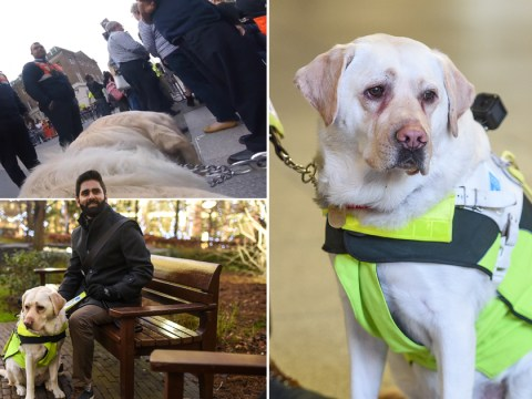 Blind man attaches camera to guide dog to film abuse he gets on a daily basis