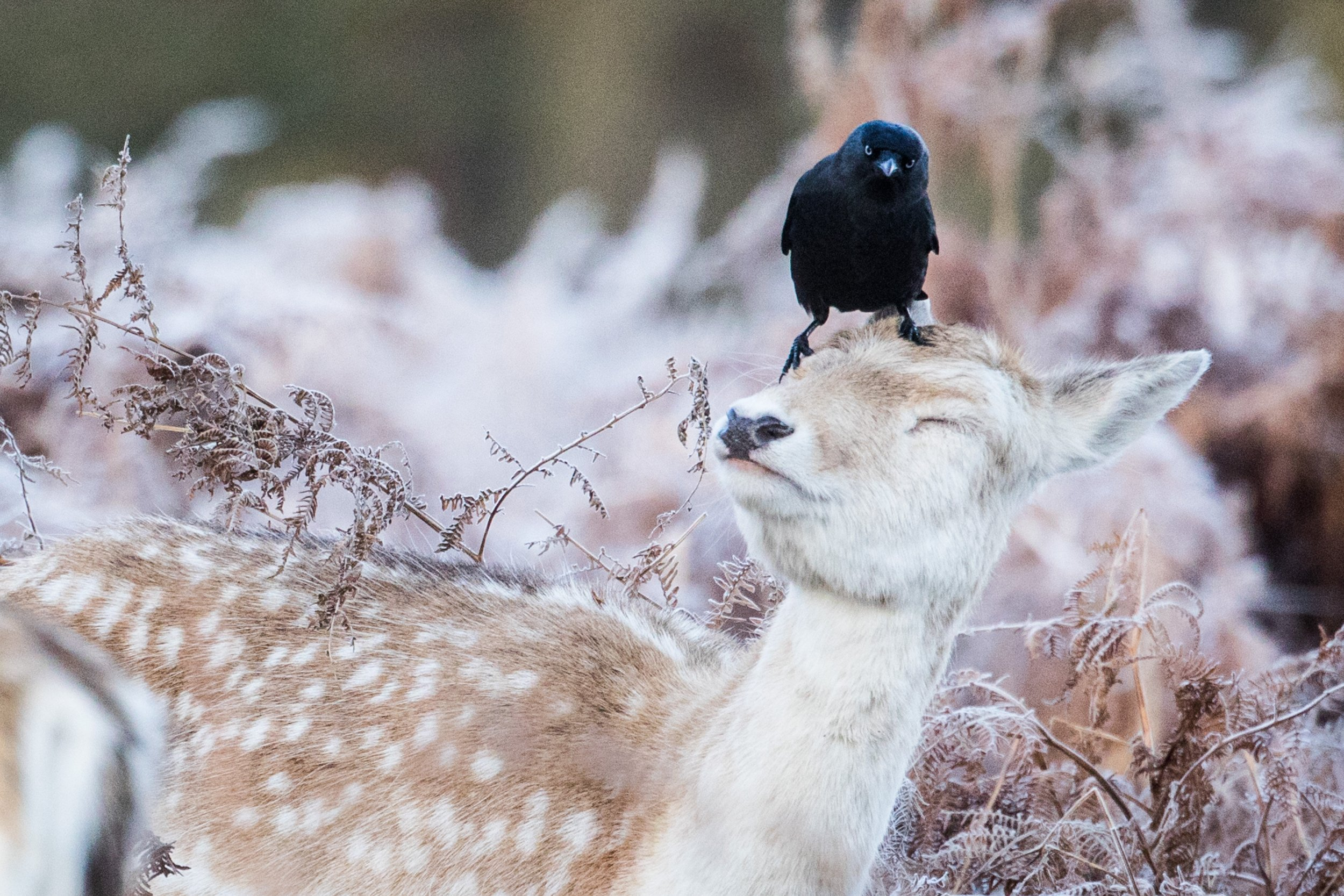 Breathtakingly beautiful images of Britain in all its wintry glory