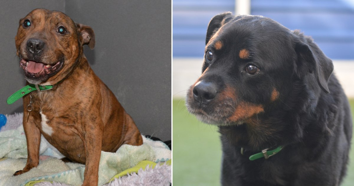 These were the first two Battersea abandoned pups of 2017